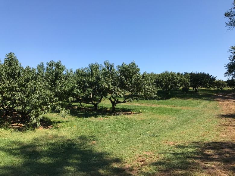 Lyman Orchard